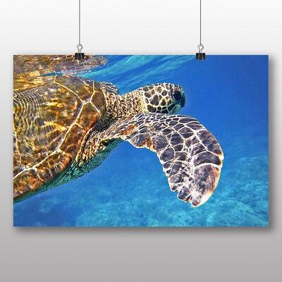 Big Box Art Sea Turtle No.2 Photographic Print
