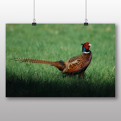 Big Box Art Pheasant Bird Photographic Print