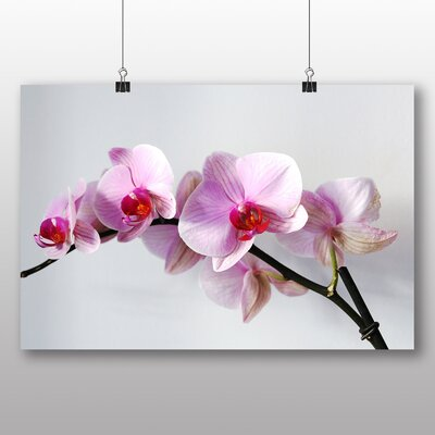 Big Box Art Pink Orchid Flower Photographic Print