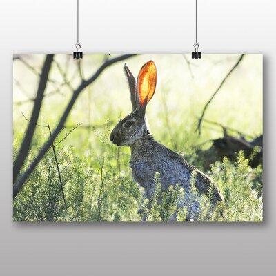 Big Box Art Rabbit Hare Photographic Print