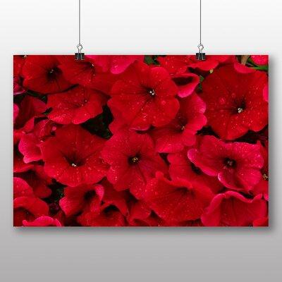 Big Box Art Seeing Flowers Photographic Print