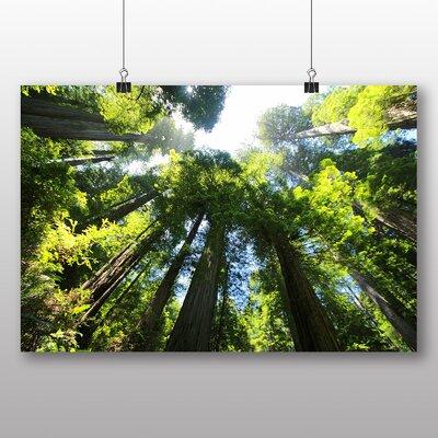 Big Box Art Sequoia Redwood Tree Forest Photographic Print