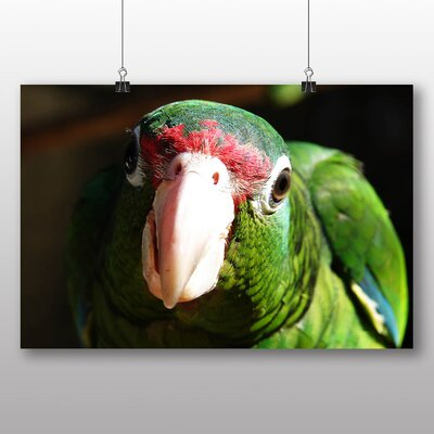 Big Box Art Parrot No.2 Photographic Print