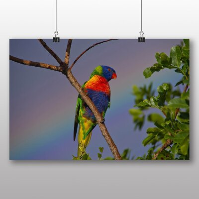 Big Box Art Parrot No.2 No.2 Photographic Print
