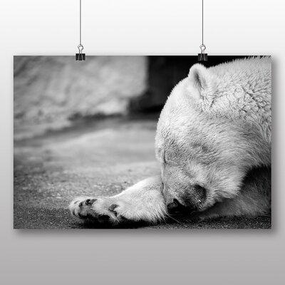 Big Box Art Polar Bear No.2 Photographic Print