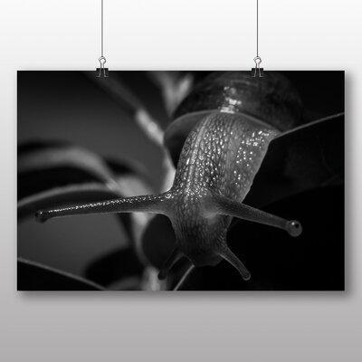 Big Box Art Snail No.2 Photographic Print