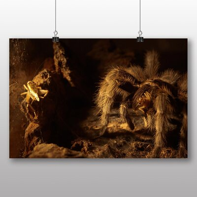 Big Box Art Spider No.2 Photographic Print