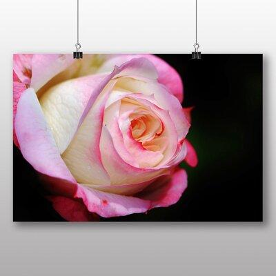 Big Box Art Pink Rose Flower No.6 Photographic Print