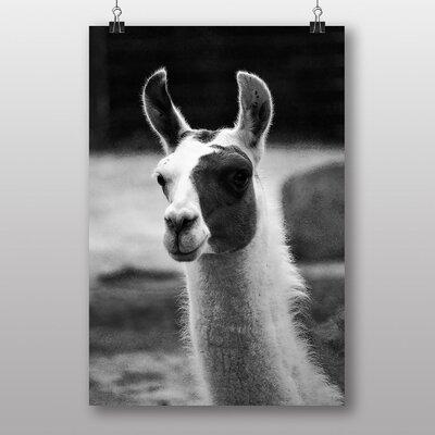 Big Box Art Llama Photographic Print