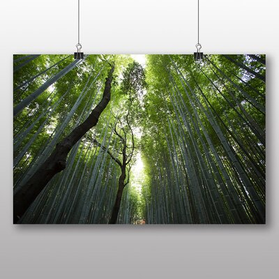 Big Box Art Tall Forest Photographic Print