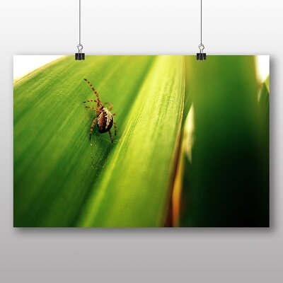 Big Box Art Spider No.7 Photographic Print