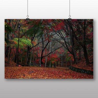 Big Box Art Maple Tree Forest Autumn Photographic Print