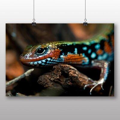 Big Box Art Splendor Skink Lizard Photographic Print