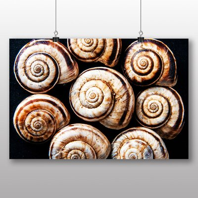 Big Box Art Snail Shells No.3 Graphic Art