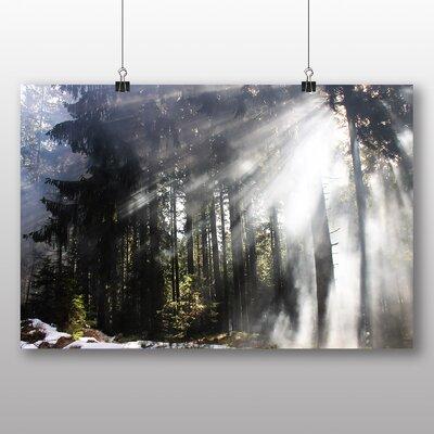 Big Box Art Sunlight Forest No.9 Photographic Print