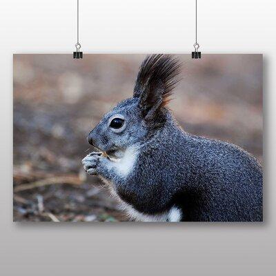 Big Box Art Squirrel No.6 Photographic Print