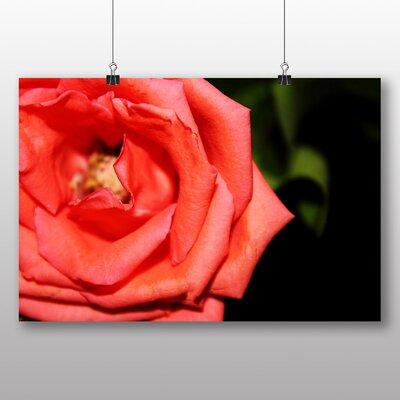 Big Box Art Orange Rose Flower Photographic Print