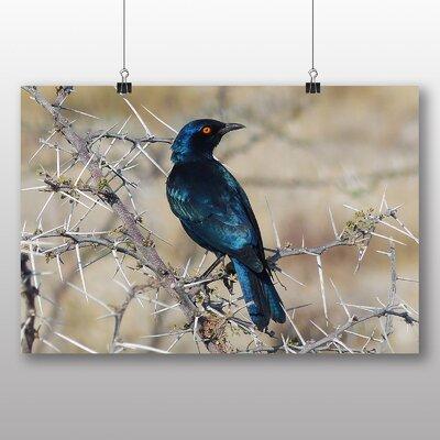 Big Box Art Starling Photographic Print