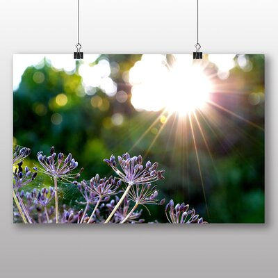Big Box Art Sunlight Over Meadow No.1 Photographic Print