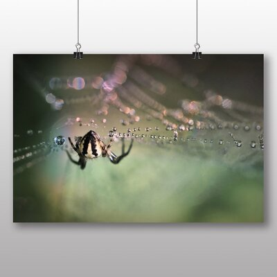 Big Box Art Spider and Cobweb No.2 Photographic Print