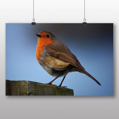 Big Box Art Robin No.2 Photographic Print