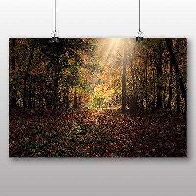 Big Box Art Sunlight Forest No.10 Photographic Print