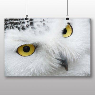 Big Box Art Snowy Owl Eyes Photographic Print