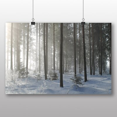 Big Box Art Sunlight Forest No.13 Photographic Print