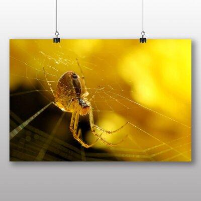 Big Box Art Spider No.3 Photographic Print