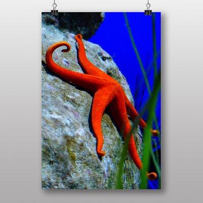 Big Box Art Starfish No.3 Photographic Print