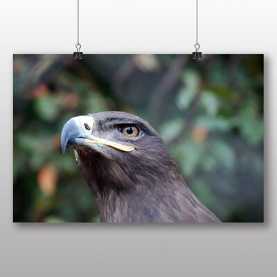 Big Box Art Steppe Eagle Bird Photographic Print