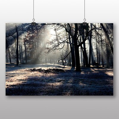 Big Box Art Sunlight Forest No.8 Photographic Print