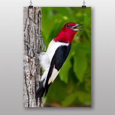 Big Box Art Woodpecker Photographic Print