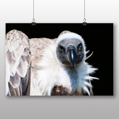 Big Box Art Vulture No.3 Photographic Print