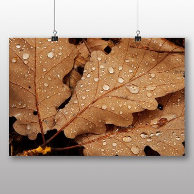 Big Box Art Water Drops on Leaves Photographic Print