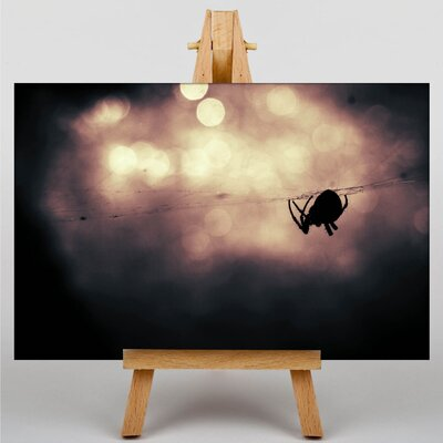 Big Box Art Spider and Cobweb No.1 Graphic Art on Canvas