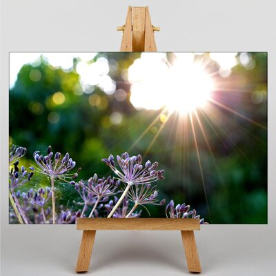 Big Box Art Sunlight over Meadow No.1 Photographic Print on Canvas
