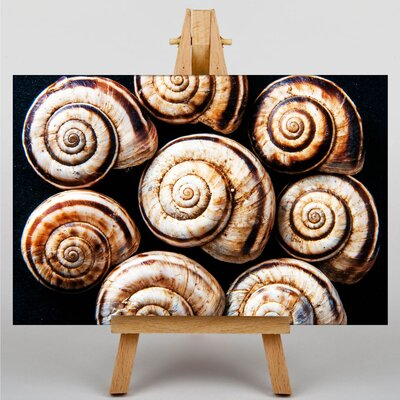 Big Box Art Snail Shells No.3 Photographic Print on Canvas