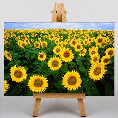 Big Box Art Sunflowers Photographic Print on Canvas