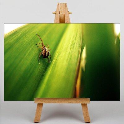 Big Box Art Spider No.7 Photographic Print on Canvas