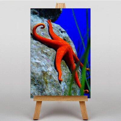 Big Box Art Starfish No.3 Photographic Print on Canvas