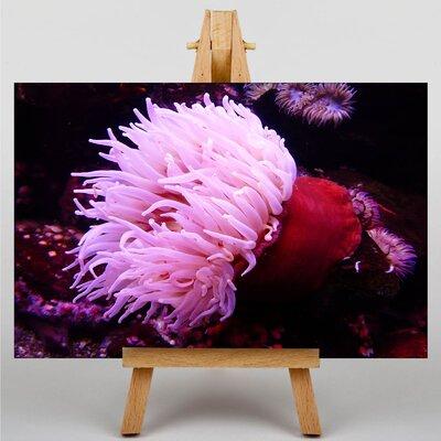 Big Box Art Sea Anemone No.2 Photographic Print on Canvas