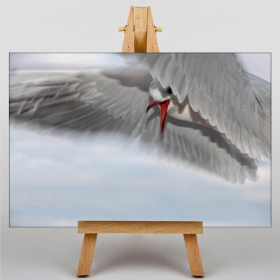 Big Box Art Seagull Graphic Art Wrapped on Canvas