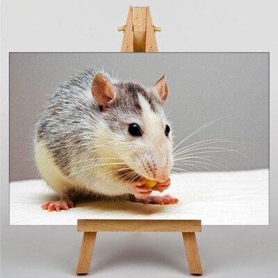 Big Box Art Rat Photographic Print on Canvas