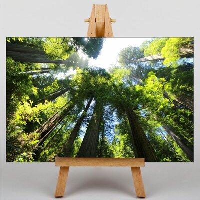 Big Box Art Sequoia Redwood Tree Forest Photographic Print on Canvas