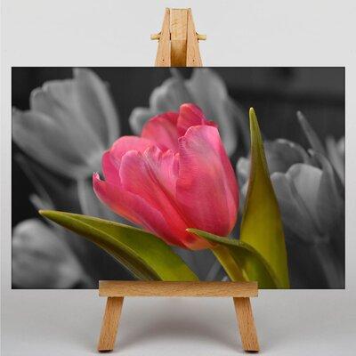 Big Box Art Pink Purple Tulip Flower No.1 Photographic Print on Canvas