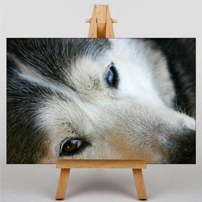 Big Box Art Siberian Husky Photographic Print on Canvas