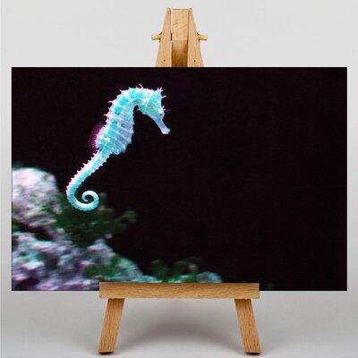 Big Box Art Seahorse No.2 Graphic Art on Canvas