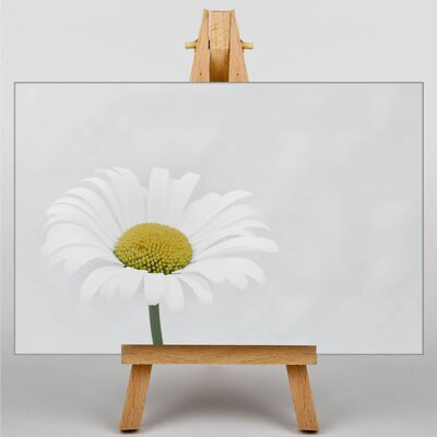 Big Box Art White Daisy Flower No.9 Photographic Print Wrapped on Canvas
