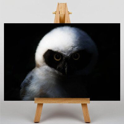 Big Box Art Owl No.2 Photographic Print Wrapped on Canvas
